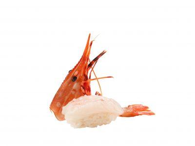牡丹蝦一尾